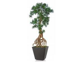Uměly strom Podocarpus Root Mini (130cm)  nohoplod
