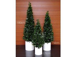 Umělý strom Vavřín Cone (Varianta 180cm)