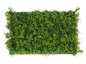Panel umělý Buxus Plumoso, 58x39cm