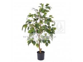 Umělý strom Fikus Benji (75cm)