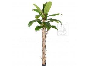 Umělý strom Banánovník (260cm)