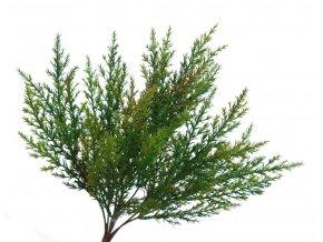 Větvička Thuja (35cm)