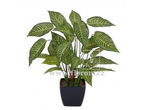 Umělá rostlina Aphelandra (50cm)