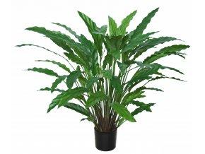Umělá rostlina Calathea (80cm)