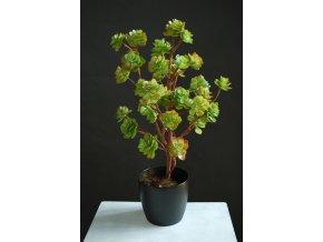 Umělá rostlina Echeveria Bush (75cm)
