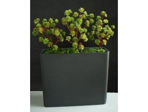 Umělá rostlina Echeveria Fence (80cm)