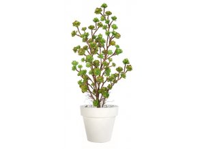 68869 echeveria plant lux 120 cm multicolor 5421m01