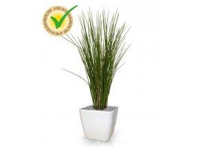 Umělá rostlina Honey Grass (80cm)