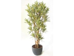 Umělý strom Dracaena Reflexa Boschetto (Varianta (220cm) zelená)