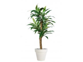 84822 cordyline plant 160 cm variegated 5416005