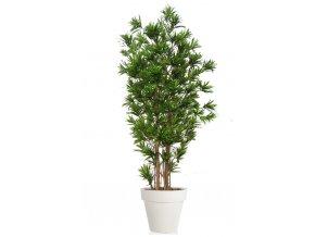 Dracaena Reflexa Multistep 260 cm Green V4008A13