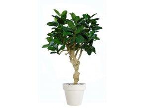 26560 ficus elastica crown 180 cm green 5426005