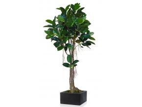 92515 ficus elastica mash root 220 cm green 5426004