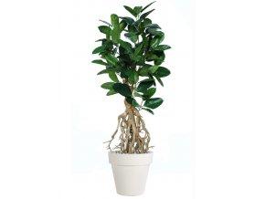 ficus elastica root 200 cm green 5426006