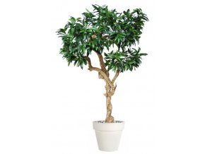17262 mango nidra 250 cm green 1069005 2