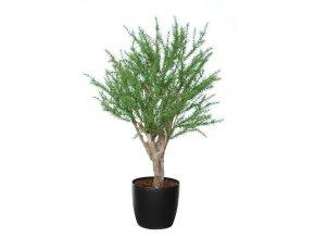22118 rosemary wild robustina 100 cm green 4229001