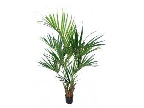 77052 kentia palm w pot 160 cm green 5434grn