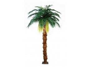 Majesty Queen Palm