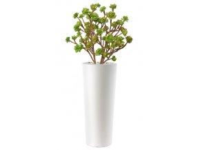 12584 echeveria bush lux 150 cm multicolor 5419m01