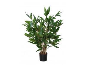 Dracaena Surculosa w pot 60 cm Green 5432GRN
