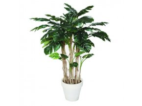 Philodendron lux