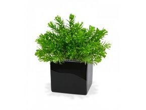 Umělá rostlina Senecio (15cm)