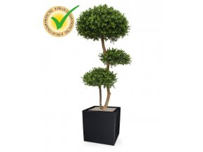 138614uv buxus ball x3 deluxe 140 panama 40 shiny black