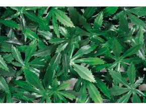 7587 1 zivy plot ctvercovy jamaica 50cm x 50cm
