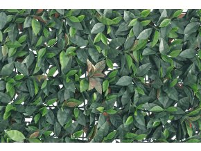 7581 1 zivy plot verdecor photinia 50cm x 50cm