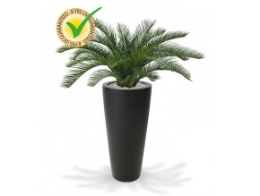180106uv cycas palm deluxe 60 tondo 70 antraciet