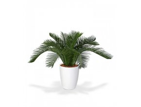 Umělá palma Cycas Baby (30cm)