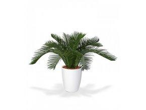 Umělá palma Cycas Baby (50cm)