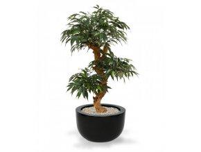 Umělá bonsai Shirakashi (80cm)