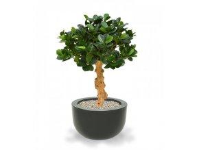 Umělá bonsai Panda (60cm)