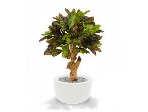 Umělá rostlina Croton (80cm)