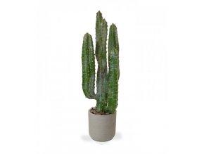 Umělá rostlina Euphorbia (70cm)