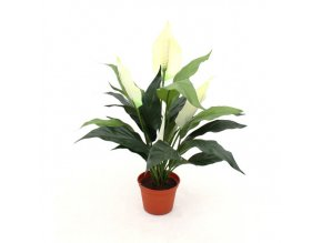 Umělá rostlina Spatiphyllum (50cm)