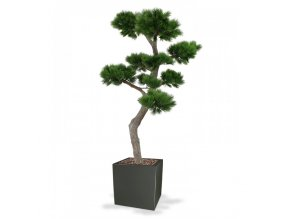 151920 pinus bonsai xl 200 panama 50 shiny grey