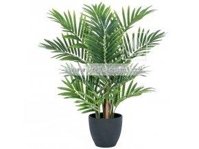 palma Areca 70cm
