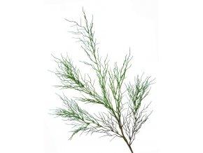 16035 coral grass 85 cm green 5445grn