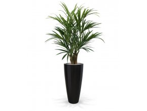175114 kentia palm deluxe 140 kentucky 80 shiny black