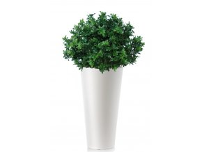 33961 buxus uvr bush 70 cm green 23102uvr