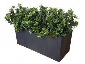 77355 buxus uvr fence 1 m lin 70 cm green 23101uvr 1