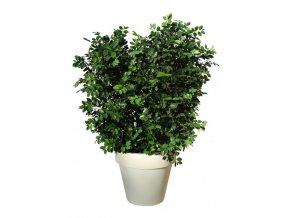 45362 ficus ginseng uvr boschetto 160 cm green 62101uvr