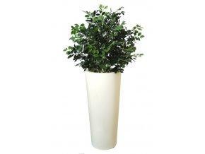 18785 ficus ginseng uvr bush 90 cm green 62102uvr