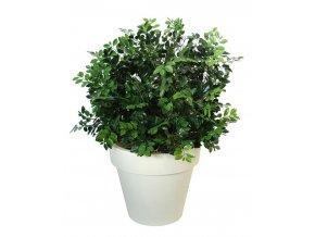 78398 ficus ginseng uvr bush lux 90 cm green 62103uvr