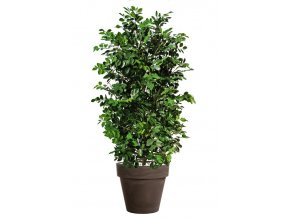 78844 ficus ginseng uvr plant 160 cm green 62106uvr stnd brnz