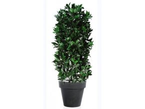 18630 laurel uvr plant 160 cm green 60106uvr