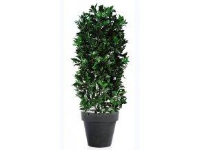 18630 laurel uvr plant 160 cm green 60106uvr