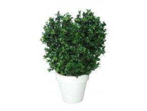 95186 osmanthus uvr boschetto 160 cm green 58101uvr 2